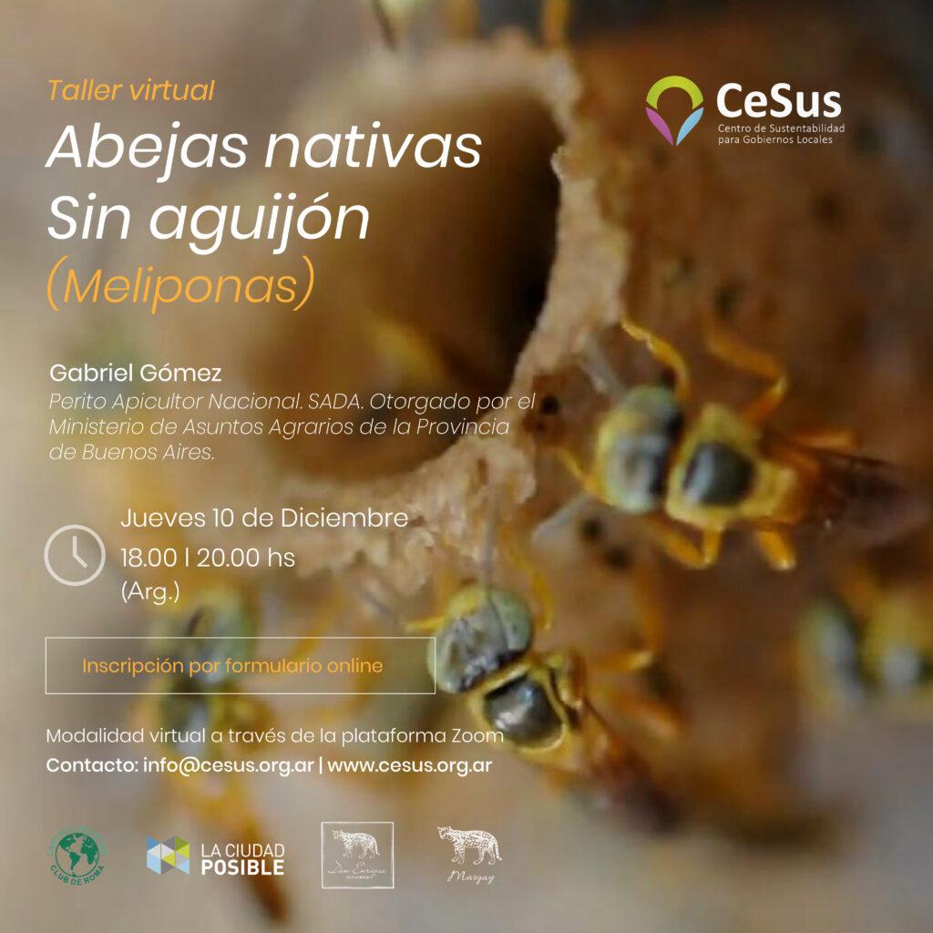 ABEJAS MELIPONAS 3-02